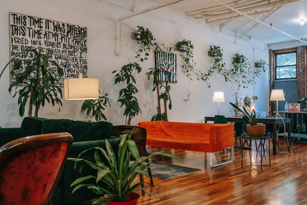rastliny v interiéri